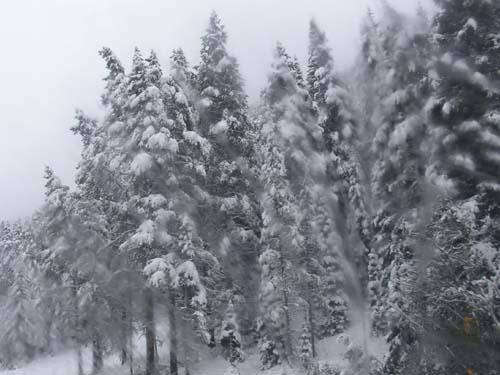snow12.jpeg